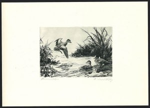 Sale Number 1121, Lot Number 2068, Hunting Permit Prints (RW7-RW11)American Widgeon, First Edition (RW9), American Widgeon, First Edition (RW9)