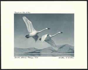 Sale Number 1121, Lot Number 2078, Hunting Permit Prints (RW12-RW20)Trumpeter Swans in Flight, First Edition (RW17), Trumpeter Swans in Flight, First Edition (RW17)